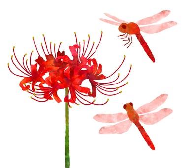 曼赤和紅蜻蜓