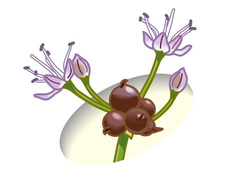 Noville Flower