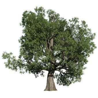 리얼한 나무 (CG) _003