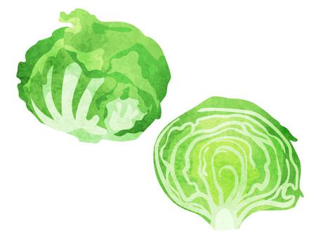Ingredients _ Vegetables _ Lettuce _ Watercolor