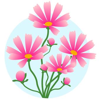 秋の花 コスモス