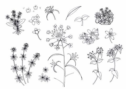 ⑫ Pen Spring Wildflowers 2