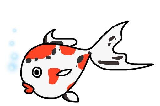 金魚・東錦