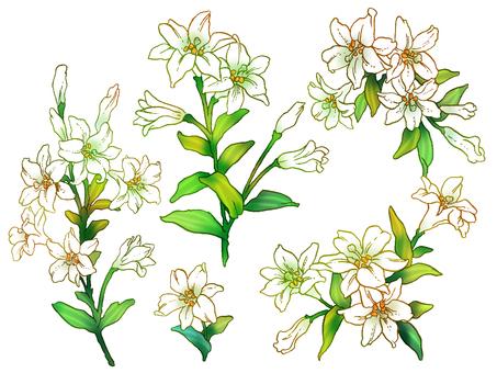 백합 꽃 세트