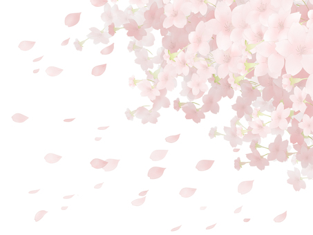 Cherry blossom background 8