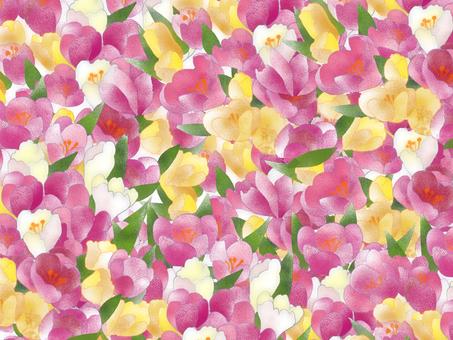 Crocus wallpaper peach color