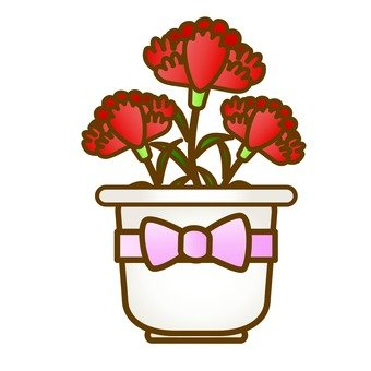 Carnation potted plant