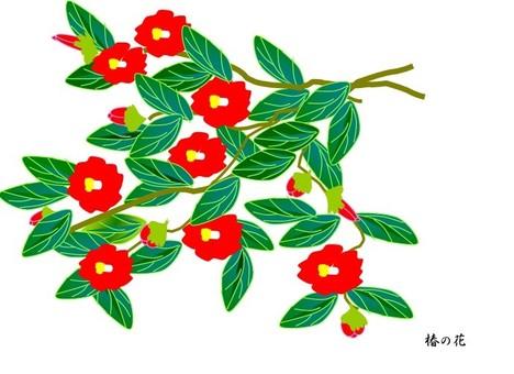 Camellia flower 2