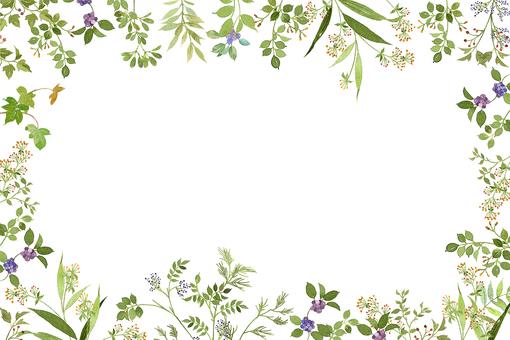 식물 프레임