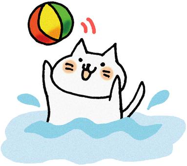 Beachball cat