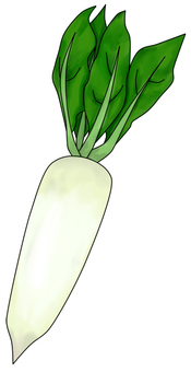 Daikon (with wire)