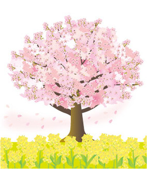 Cherry tree and rape blossoms and petals