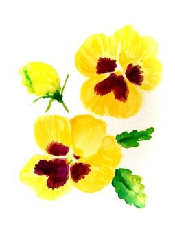 三種顏色紫羅蘭