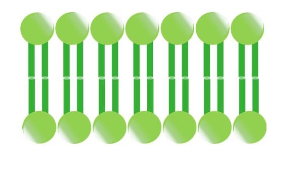 Cell membrane (plant)
