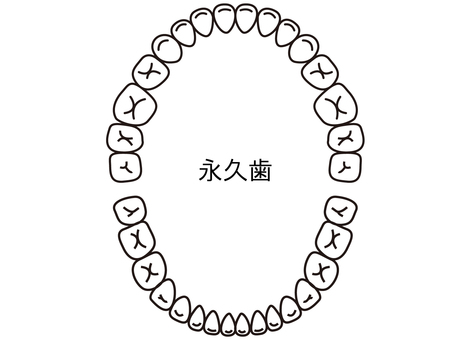 Tooth alignment (permanent teeth) from above to black and white