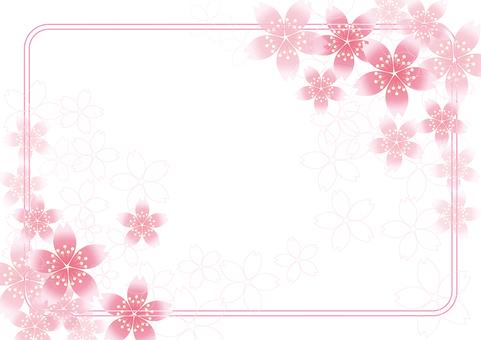 Sakura Sakura & Board 55