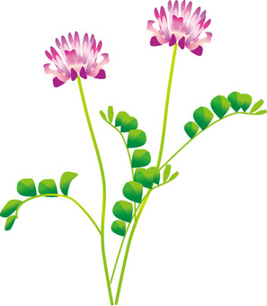 연꽃의 꽃