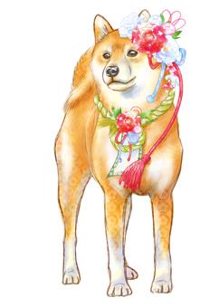 New Year Shiba Inu