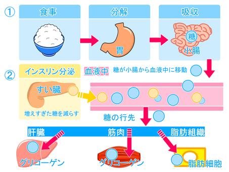 Blood sugar flow