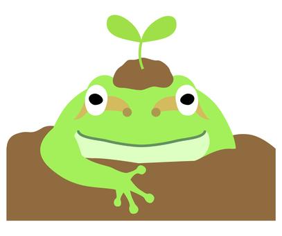 Spring awakening (frog)