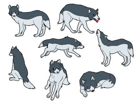 7 species of wolf