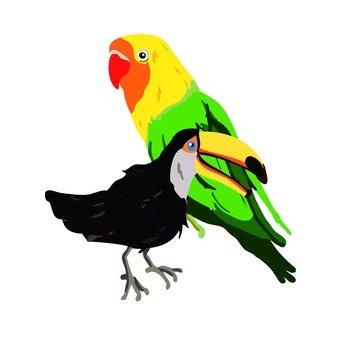 Birds 2 feathers
