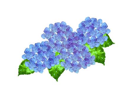 紫陽花 水彩4