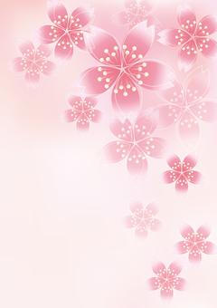 Sakura Sakura 6