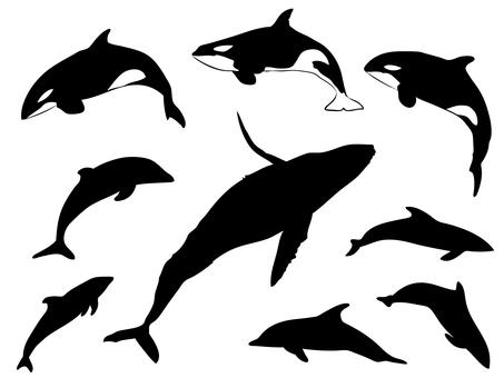 クジラ類_シルエット