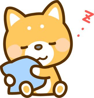 Shiba Inu sleeping with cushion