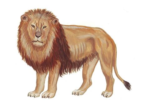 수컷 사자