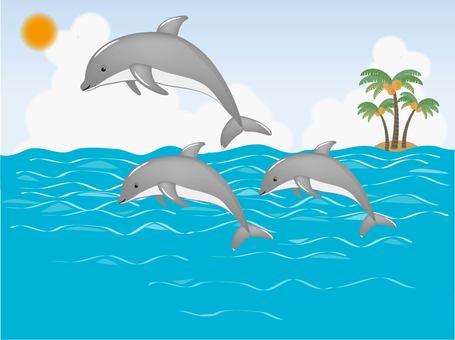 Jump Dolphin Daytime