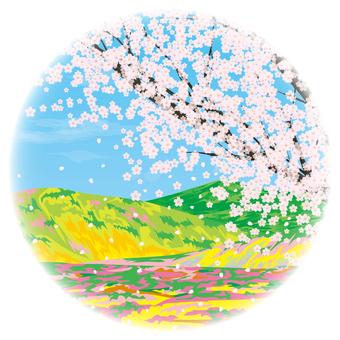 봄의 야산과 벚꽃 봄의 이미지