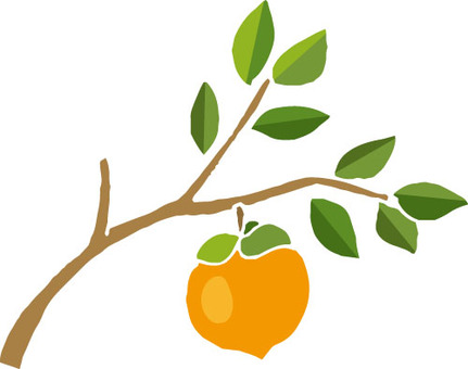 Fruits (without persimmon and branch wires)