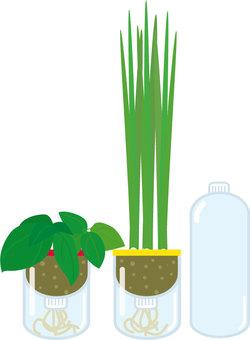 PET bottle vegetable garden