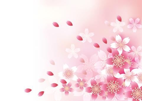벚꽃의 꽃 59