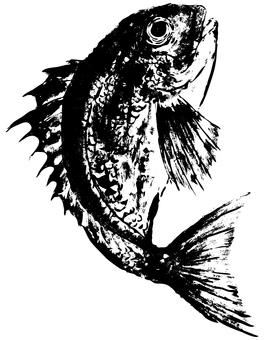 Brush drawn sea bream (black)