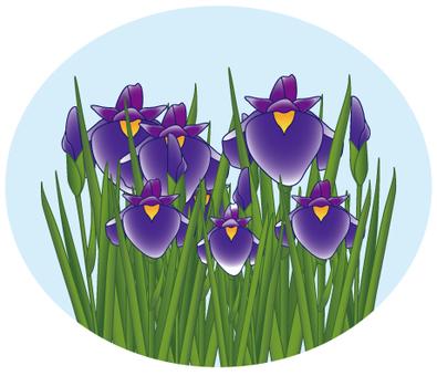 Flower - iris (shoumu) -10