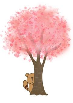 Yoshashima Risu (I'm waiting under that tree)