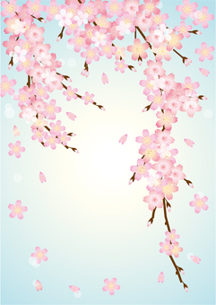 Cherry blossoms and light blue background A4 size