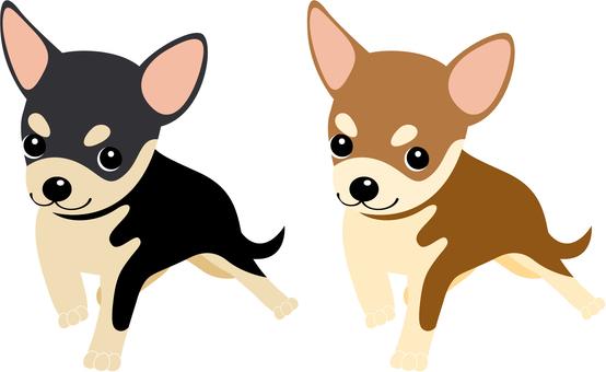 Chihuahua icon 5