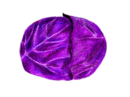 Purple cabbage (colored pencil drawing)