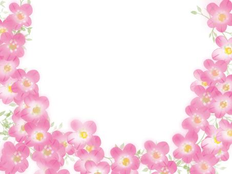 Sakishiraga pink frame