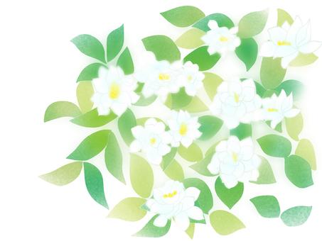 山子(梔子)花