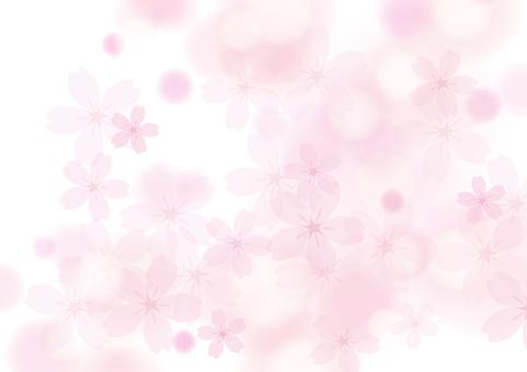 Sakura 29
