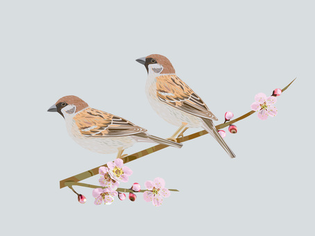 Plum and sparrow
