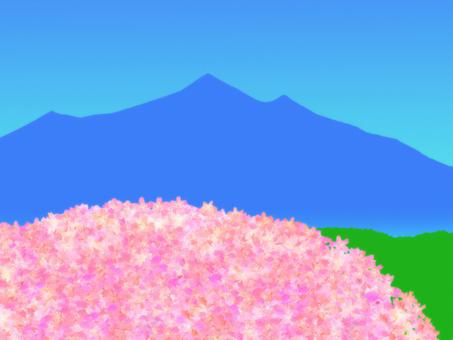 Sakura and Mt. Tsukuba