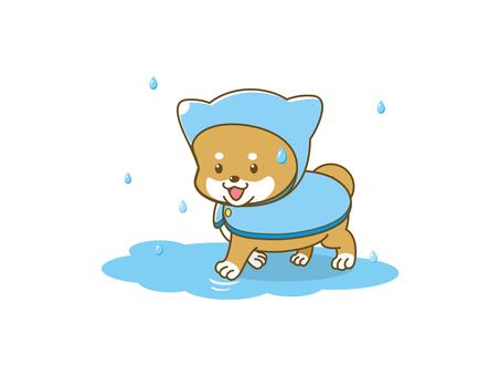 Poach Shiba _ rainy season