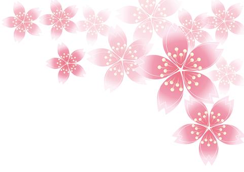 Sakura Sakura 19
