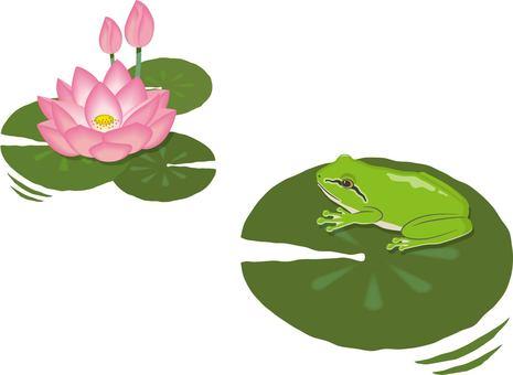 Lotus Tree Frog